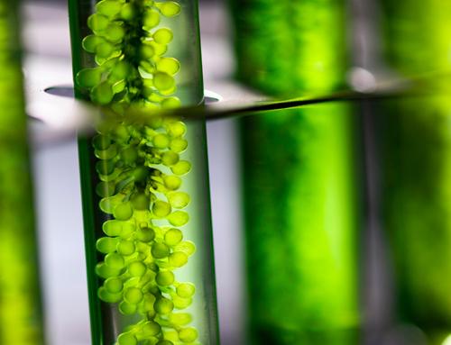 Biotech: tutti i colori delle biotecnologie