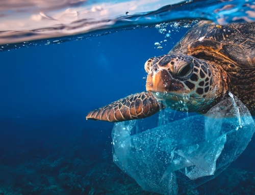 Dall'amore per il pianeta l'amore per la sua protezione